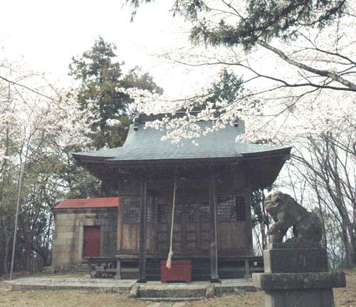 羽黒神社と桜