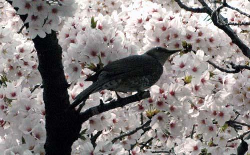 密を吸う野鳥