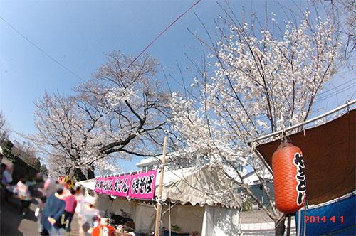 新川の桜出店