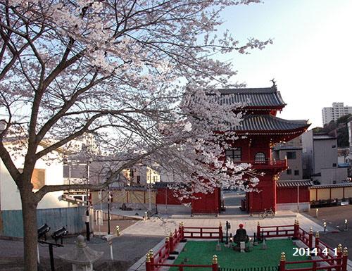 慈光寺桜赤門