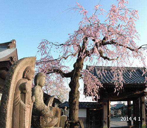 桜と石地蔵