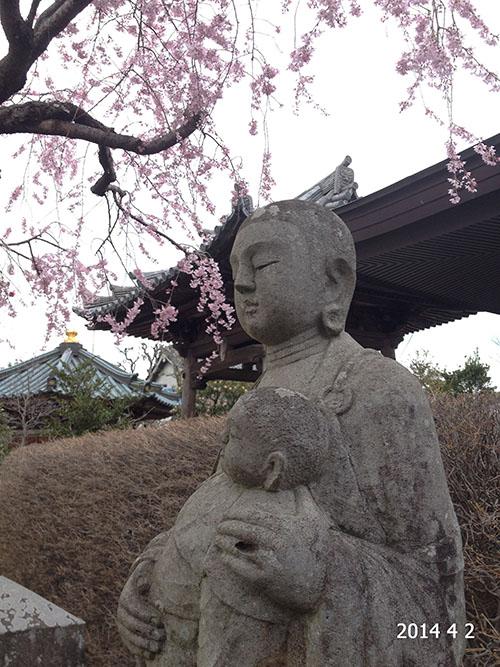 桂林寺石地蔵桜