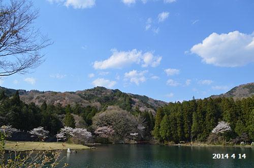 栗谷沢ダム雲と桜