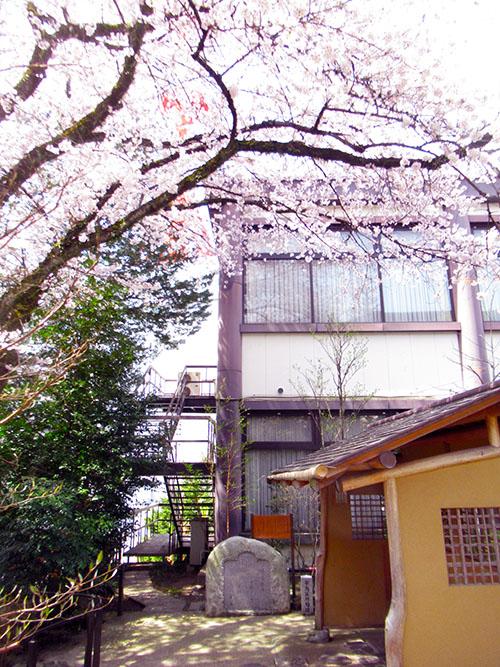 桜の蕪村(宰鳥)句碑