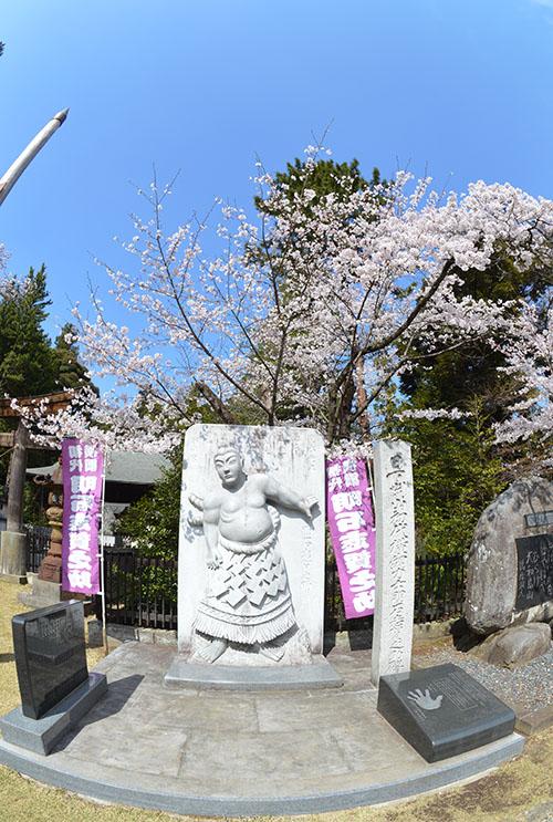 桜の志賀之助