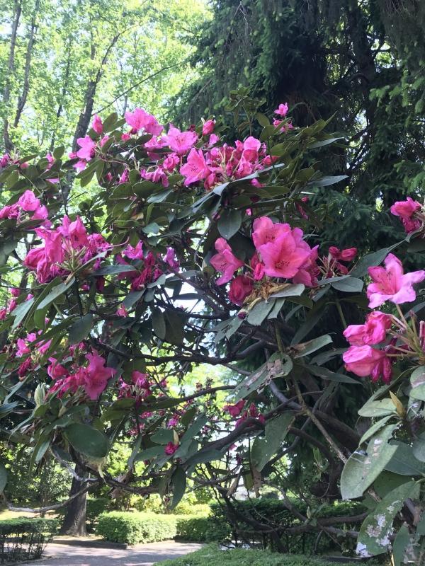 中央公園の花