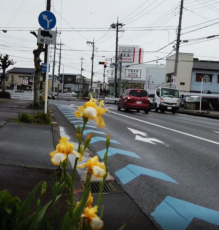 今日の花街道