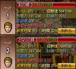 ペット エルフ暗殺者ZIN
