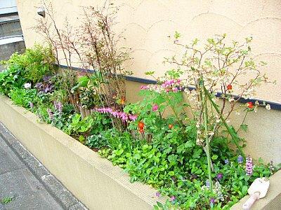 2007-04北花壇2