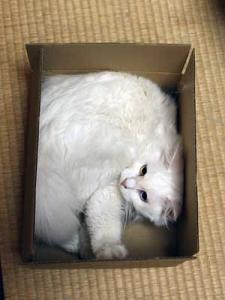 とりあえず、箱には入っとく。