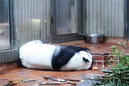 上野動物園のランラン