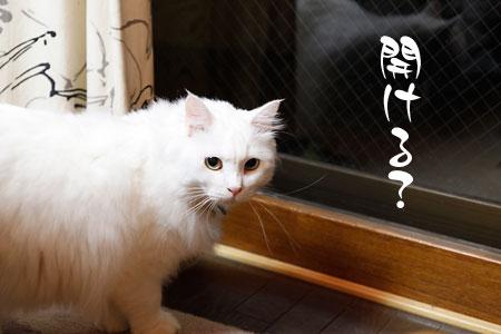 窓を開けてほしいシュシュ