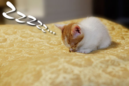 うつむき寝するごーちゃん