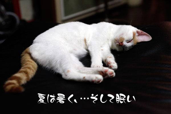 爆睡JOJO