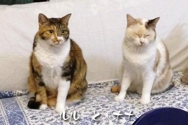 ルルとナナ
