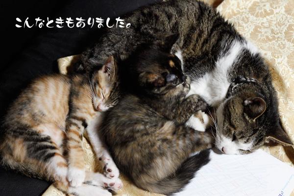 在りし日のパク 仔猫たちと眠る
