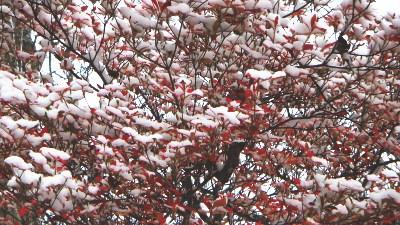 秋の樹木が雪をまとった