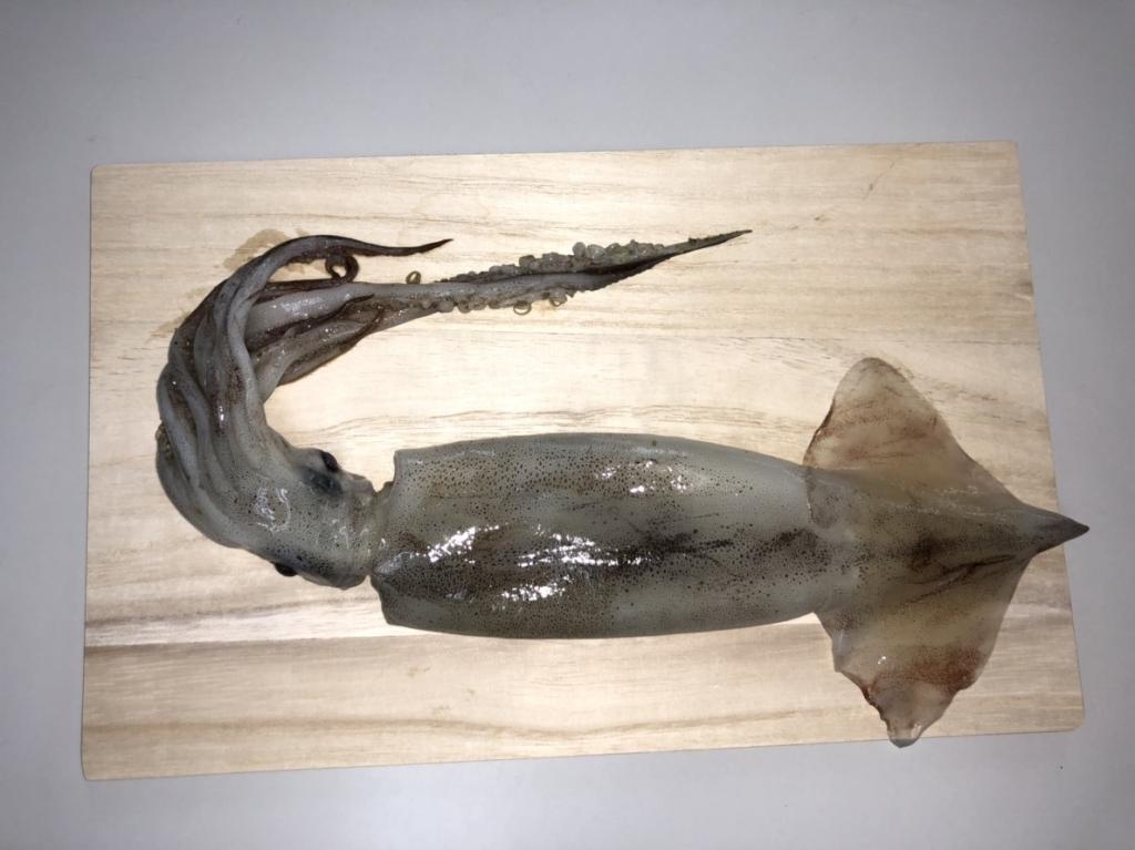 イカの解剖