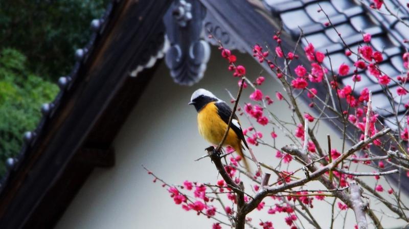 鳥本.JPG