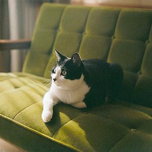 猫と暮らす。Kチェア モケットグリーン