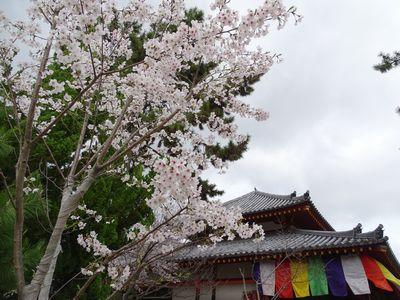 2017.4.9@奈良・西大寺