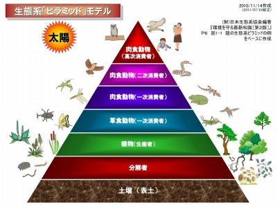 生態系ピラミッドモデル