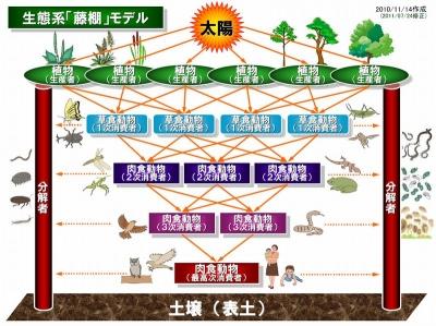 生態系藤棚モデル