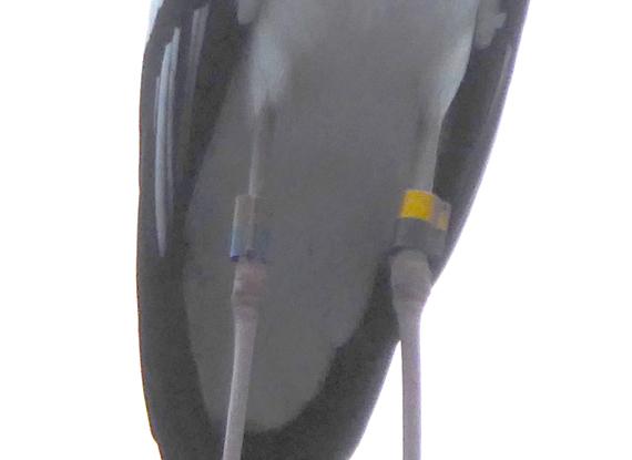 P1010301-1.jpg