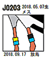 kounotori2.jpg