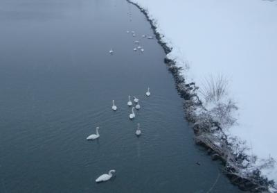雪と白鳥2