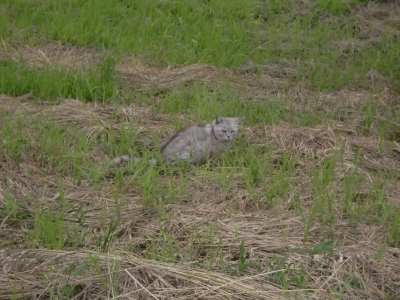 河川敷の猫2