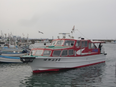 2015年4月蕪島4