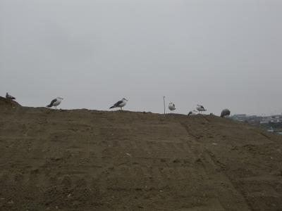 蕪島2005年11月8日�C