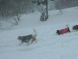 雪なんてへっちゃら〜!
