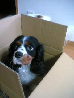 箱入り娘チリちゃま。