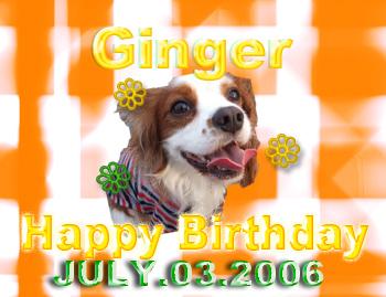 Gingerオメデト!!!