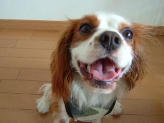 2歳になったジンジャーの笑顔!