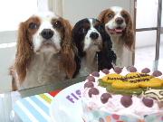 ペッパ、息子の誕生日が嬉しいらしい!イヤ、ケーキか!?