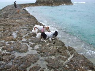 みんなで海散歩。