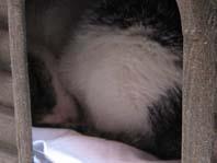 眠りねこちゃん拡大