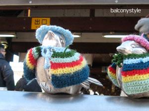 毛糸のマントでおめかし江ノ電駅のトリ