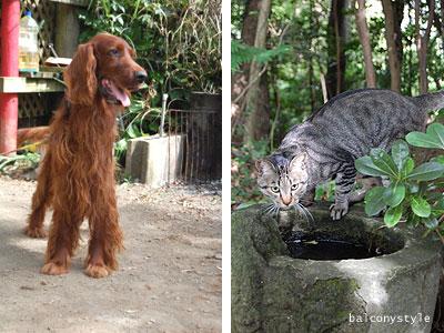 マスコット犬のクッキーと猫