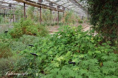 巨大なベジタブルガーデンの温室
