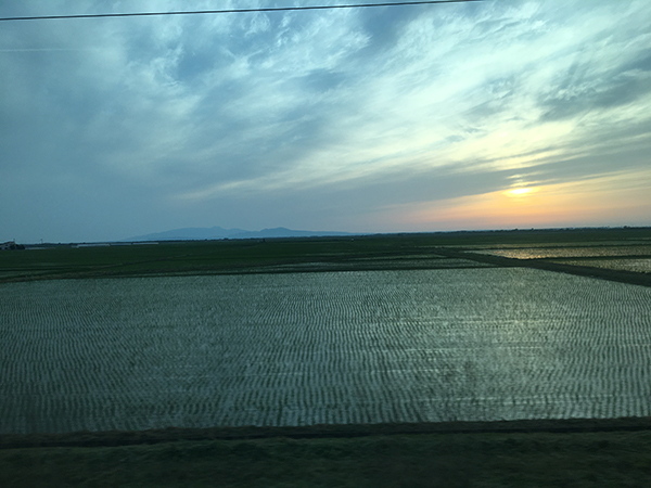 田んぼの夕陽