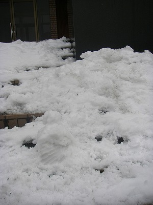 山岳博物館の前の雪