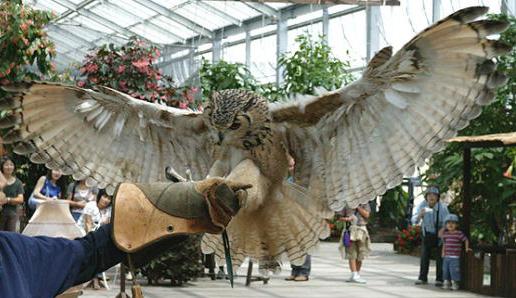 神戸花鳥園フクロウショー