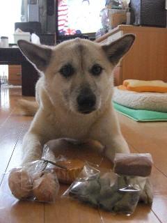 犬用おやつプレゼント