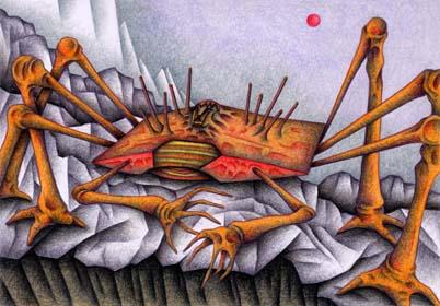 知的甲殻類