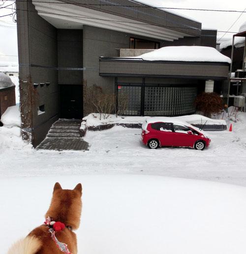 blizzard2.jpg