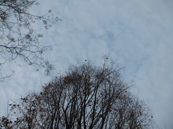 樹と空.JPG